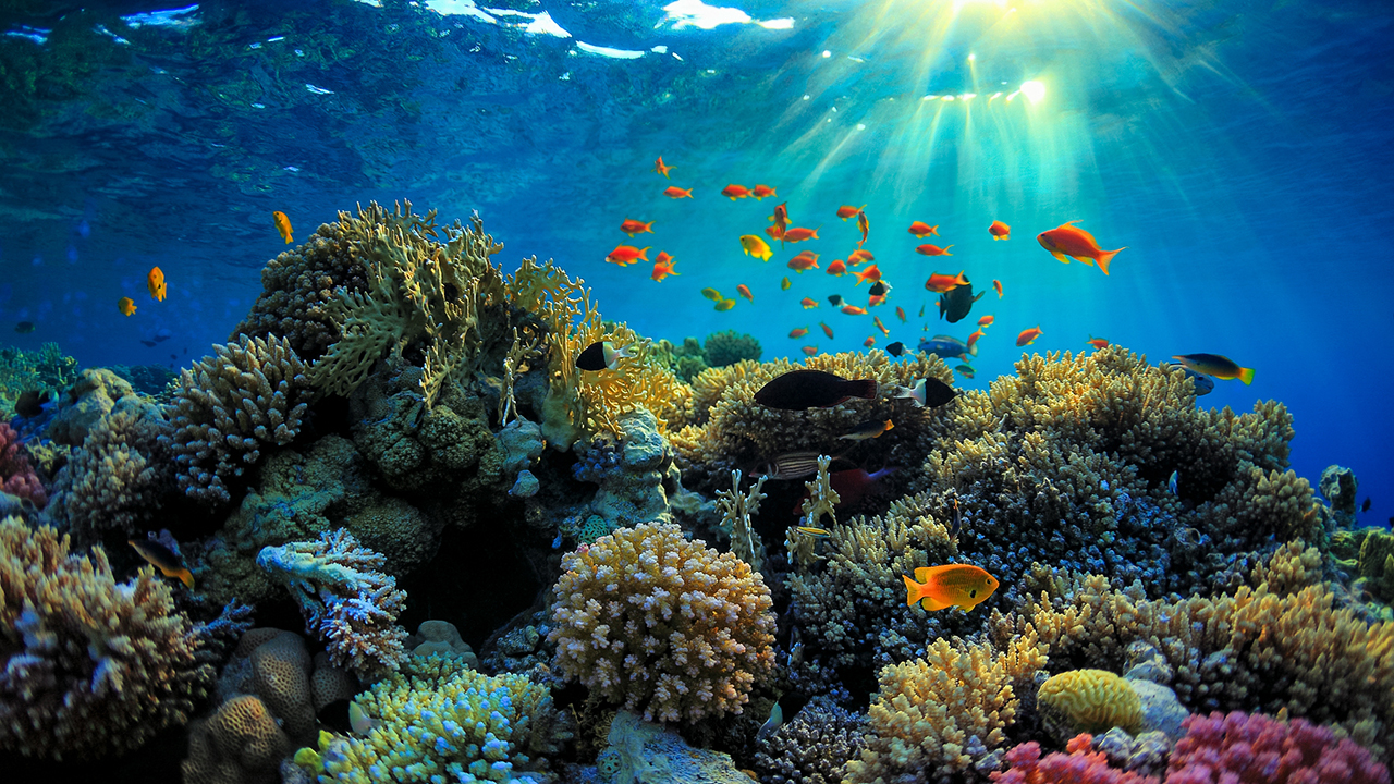 The Ten Most Beautiful Snorkel Sites in the World 1